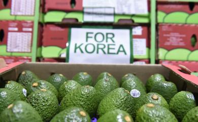 Aguacates colombianos a Corea por la vía más expedita