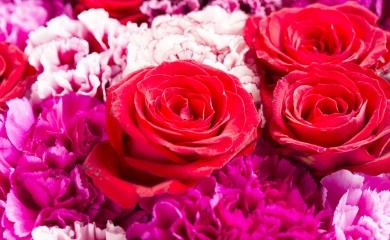 Marcando un registro histórico en las cifras del Grupo Puerto de Cartagena 600 toneladas de variedad de flores como rosas, clavel, pompón, hortencias entre otras, fueron exportadas en aproximadamente 50 contenedores a través de la terminal de Contecar con ocasión al día de San Valentín.