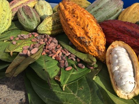 Rumbo a Malasia partió la primera exportación de Cacao de Arauca y Arauquita, cuyo puerto de embarque fue la Sociedad Portuaria Regional Cartagena.