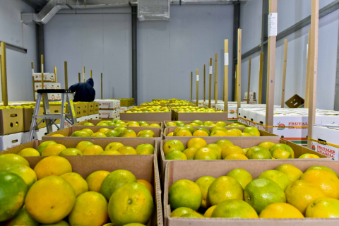 primera-exportacion-naranjas