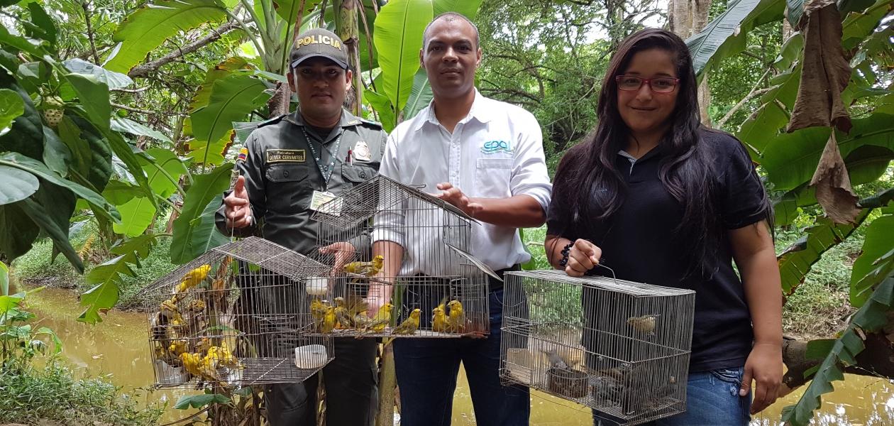 La Organización Puerto de Cartagena liberó, junto al EPA-Cartagena,la Policía Metropolitana de Cartagena y el grupo de policía ambiental y ecológica, aves que llegaron al Oasis Portuario para ser atendidas y recuperadas luego de haber sido incautadas