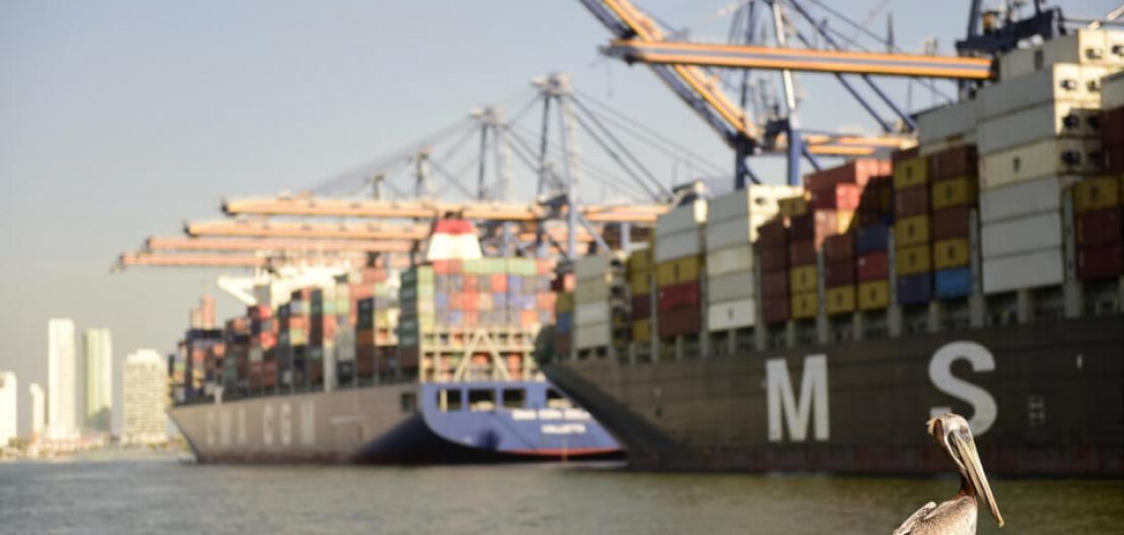 Pelicano en el Puerto de Cartagena