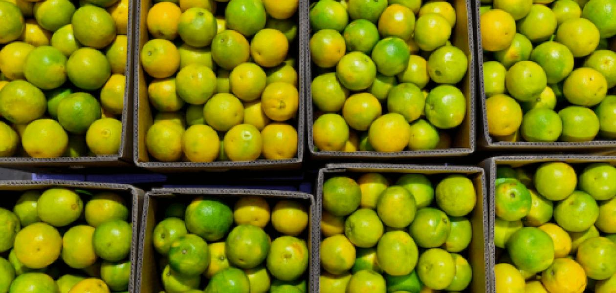 primera-exportacion-naranjas-puerto-cartagena